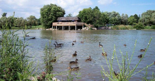 Fish Pond Information