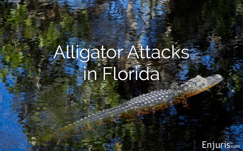 Florida Alligators Attacks How Safe Are Humans And Pets
