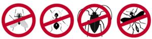 شركة مكافحة الحشرات في الخرج