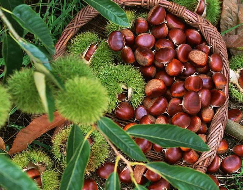 Benefits-of-chestnut-for-health