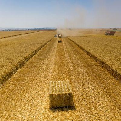 """Israel envia trigo por valor de $5 M a """"nuestros nuevos amigos en Sudán"""""""