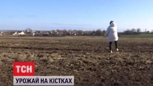 Parte de un cementerio judío en Ucrania fue profanado por agricultores que lo agregaron a sus campos, informó una estación de televisión local