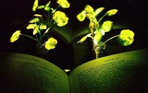 una planta da luz para leer un libro
