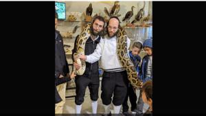 dos rabinos israelíes y una pitón enrollada en sus hombros
