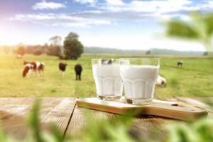Coca-Cola Israel, firmó un acuerdo con la startup Biomilk para invertir y colaborar para desarrollar productos basados en su tecnología de leche cultivada