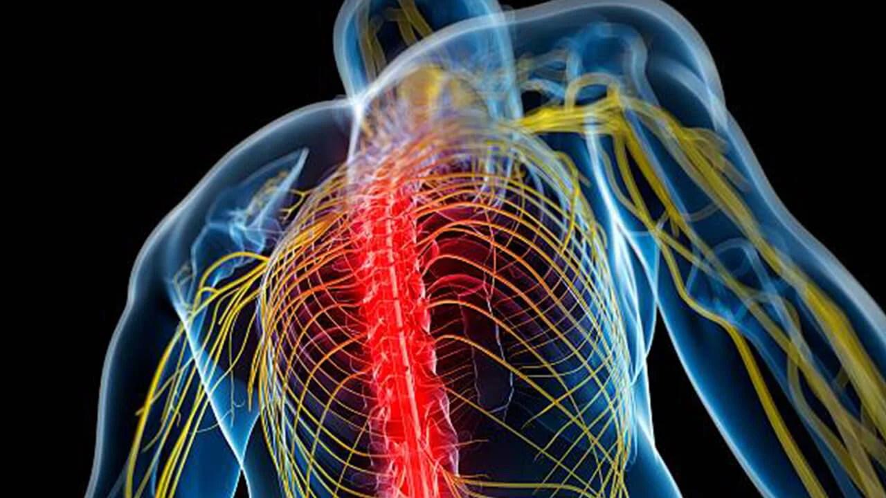 Un equipo de investigadores de Tel Aviv desarrolló una nueva tecnología para restaurar el sentido del tacto en personas con nervios dañados