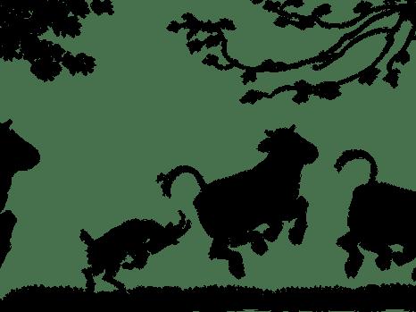 cows-305537_1280
