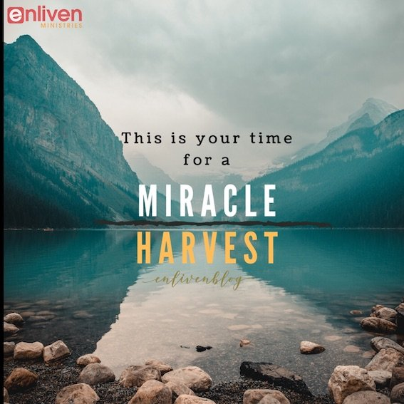 This is your time for a miracle harvest