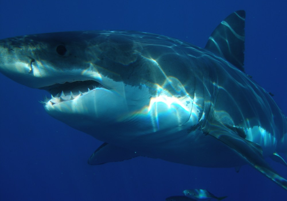 Shark Week: Top 9 Enneagram Sharks