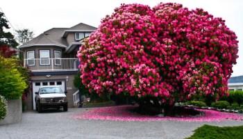 7530260-R3L8T8D-880-amazing-trees-7 arbres