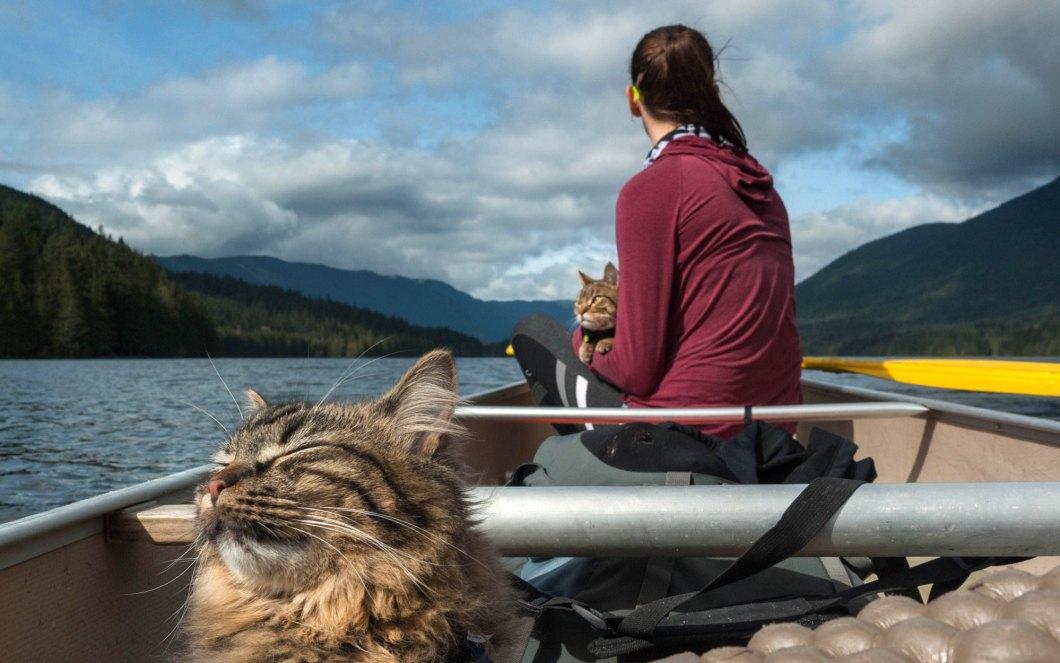 Boat-Trip-Cats-voyager avec un chat