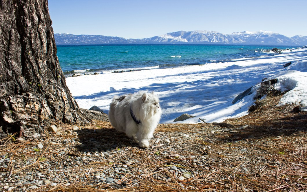 Glacier-park-Cats-CATRAVEL0516