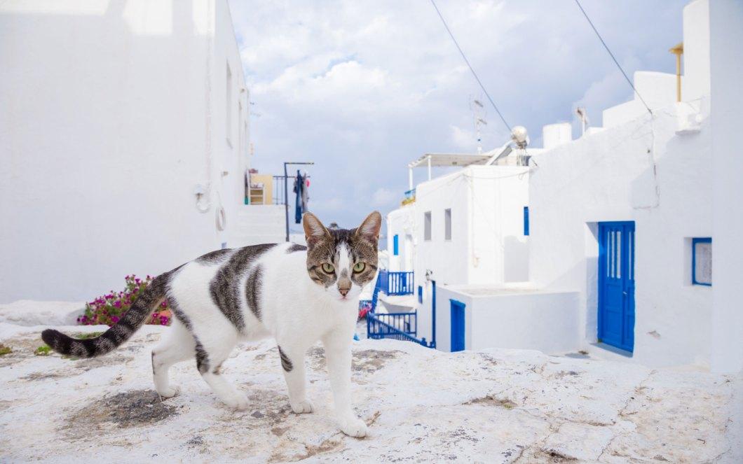 Greece-Trip-Cats-voyager avec un chat