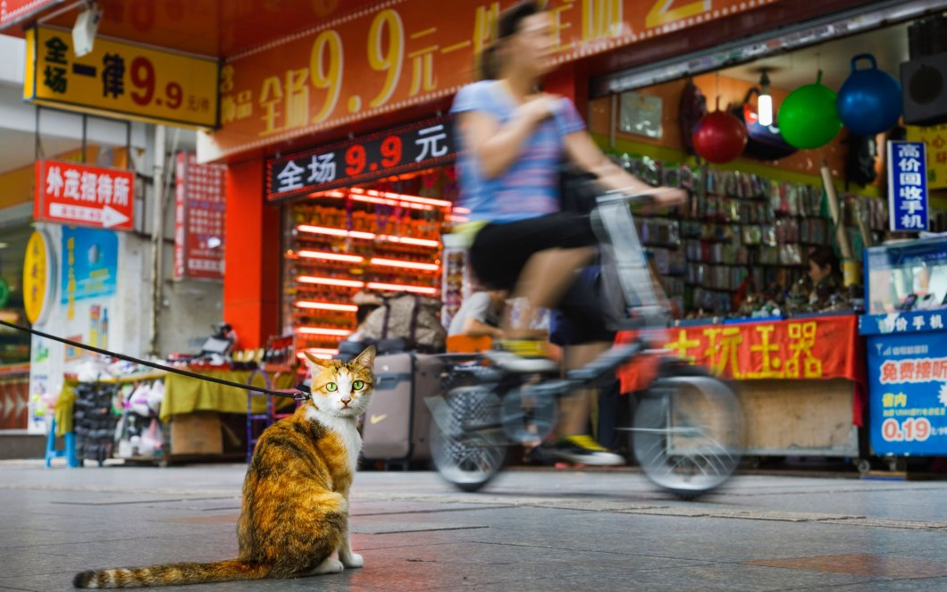 Travel-Shenzhen-Cats-voyager avec un chat