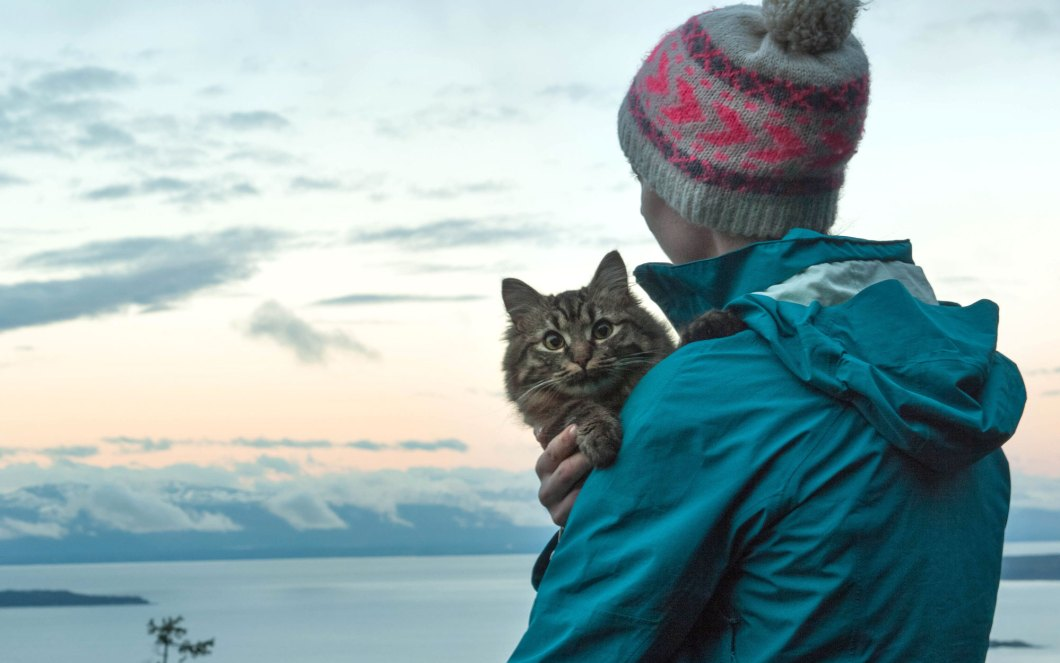 Travel-Views-Cats-voyager avec un chat