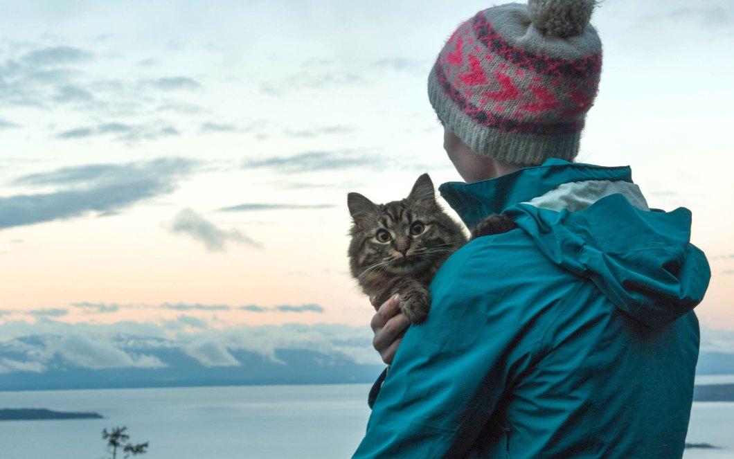 Travel-Views-Cats-voyager avec un chat