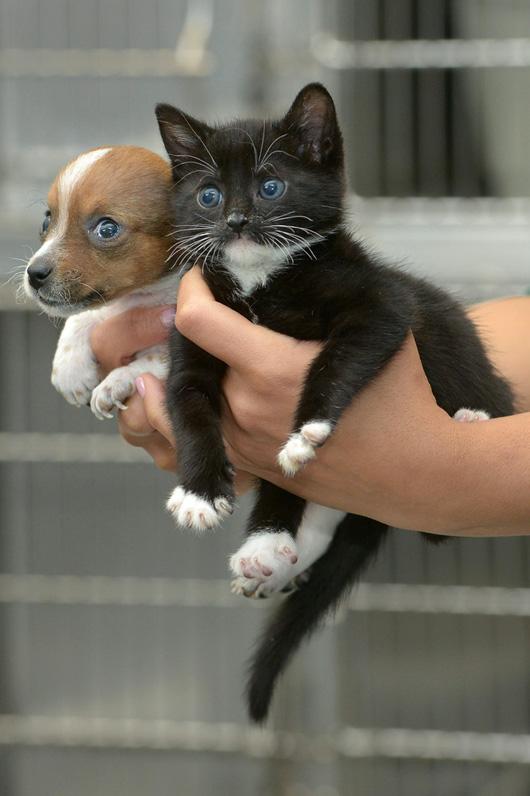 puppykitten5
