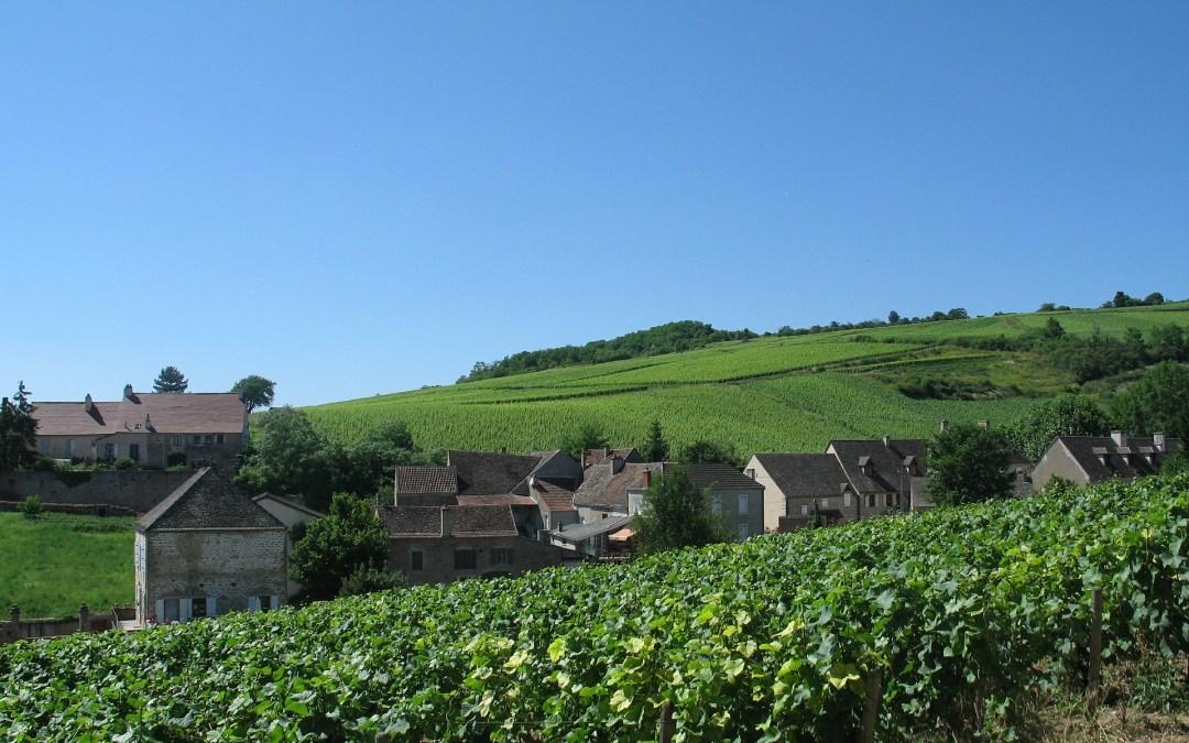 Viaggio attraverso la Côte de Nuits in 7 vini