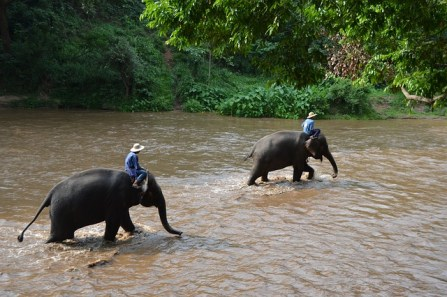 35. Auf einem Elefanten reiten