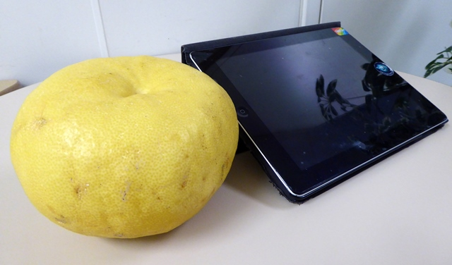 A pomelo sitting next to an iPad for size comparison.