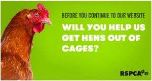 RSPCA Hens Out of Cages