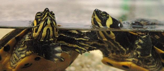 adott.tartarughe web