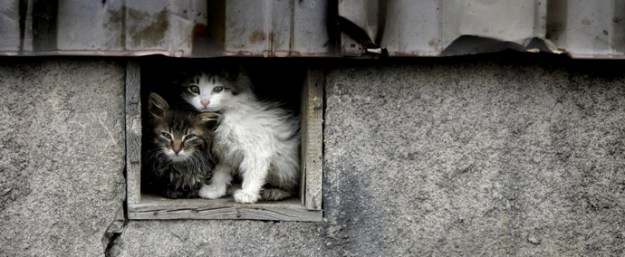 colonie feline web2
