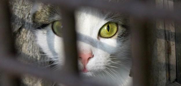 gatti in gattile web