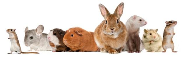 conigli e roditori web