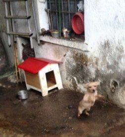 cucciolo-cortile-ns-1