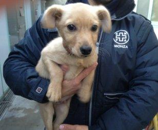 cucciolo-volontario-ns-3