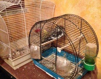 uccelli in gabbia-NS_WA0011