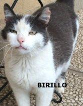 BIRILLO_NS