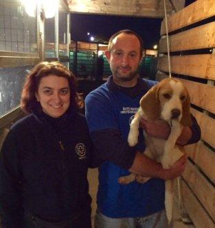 beagle in canile_NS-91C1B16