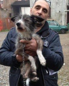 NS-cane grigio e bianco con volontario ENPA