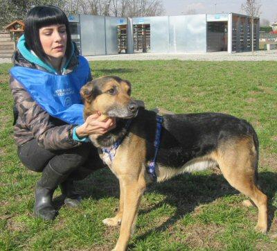 NS_cane canile con volontaria_2646