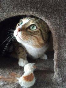 gatto romeo topino-NS_0694