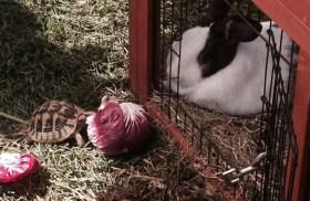 coniglio + tartaruga