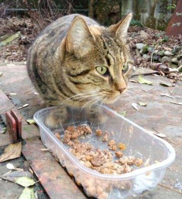 gatto buonarroti mangia-NS_0002