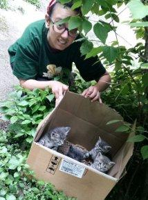 ritrovamento gattini scatola-NS-0005