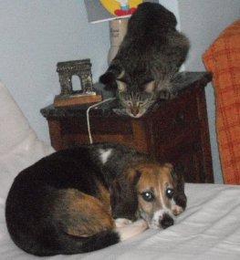 lillo e gatto-ns