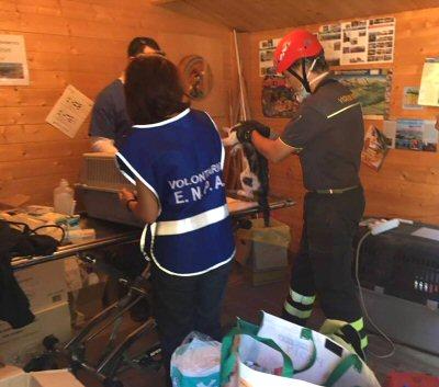 volontari enpa VVFF-Giga-0280567_NS