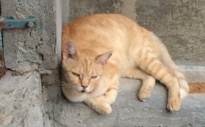 ns-gatto-rosso-wa0046