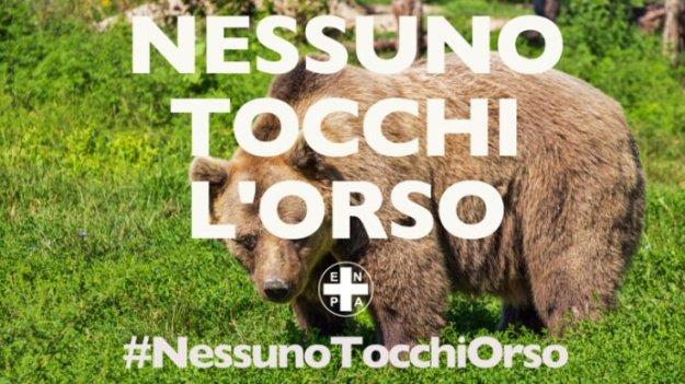 nessuno tocchi orso-NS home page