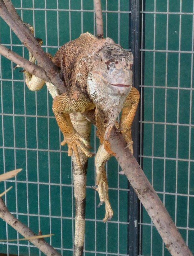 home page iguana 690_150321
