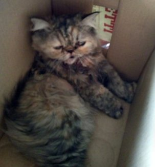 NS gattino caduto fb