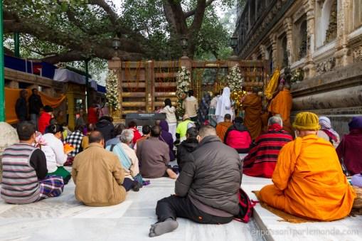 Méditation collective devant le Bodhi Tree