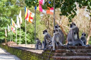 Anuradhapura-16