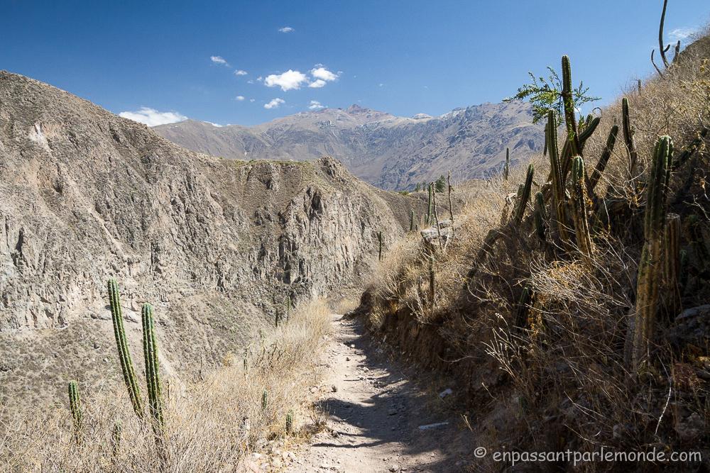 canyon-del-colca-14