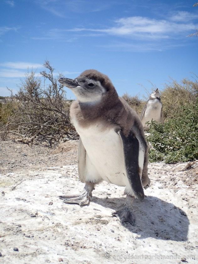 Argentine - Puerto Madryn-11